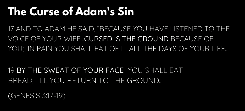 The curse of Adam's sin verse